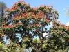 arbre-de-madere