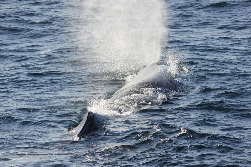 Dos baleine Madere
