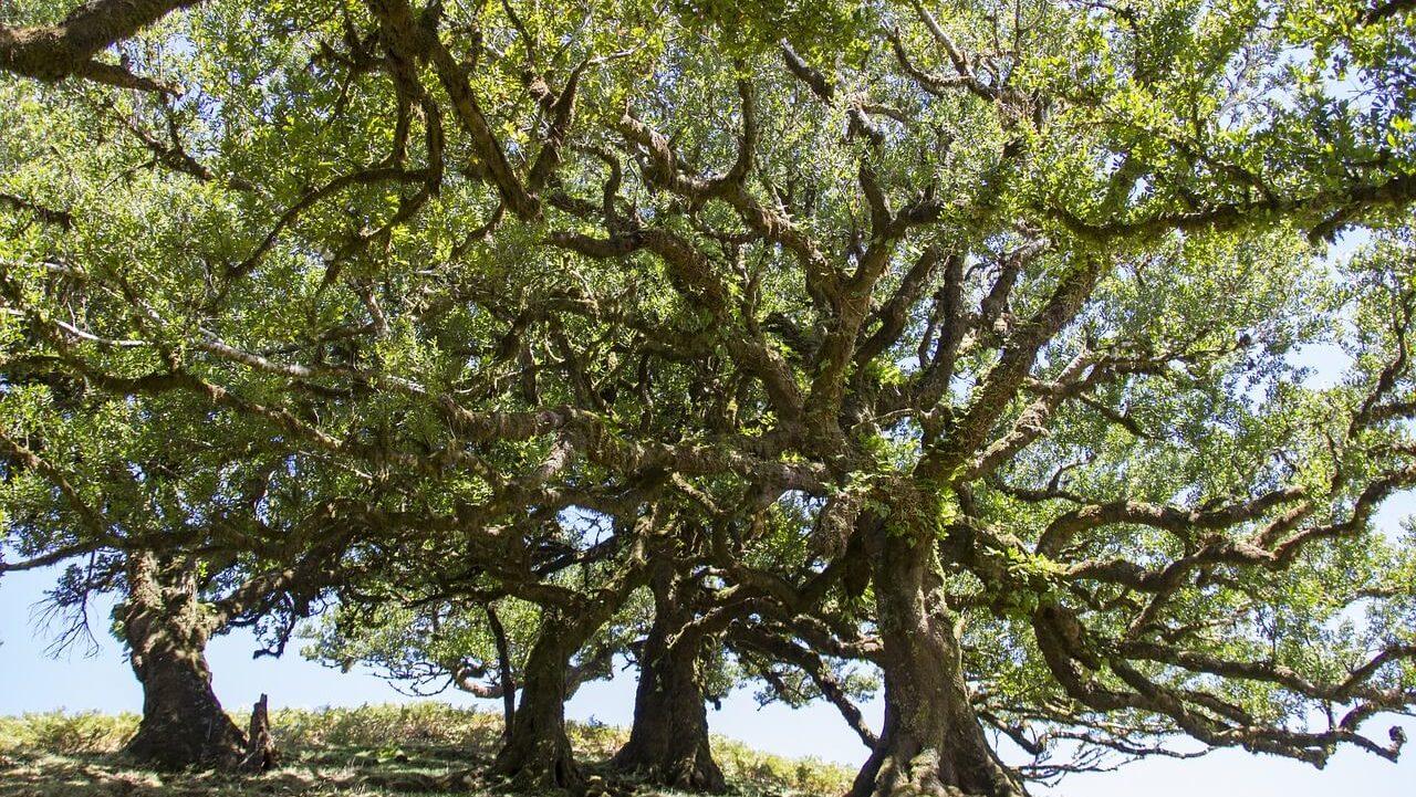 La Forêt Laurifère de Madère